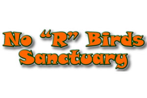 No R Birds Sanctuary:  A finely feathered themed website for a bird sanctuary.